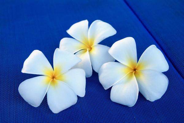 ハワイアンジュエリーのモチーフに込められた意味~おしゃれでかわいい【silver tree】のペアアクセ~