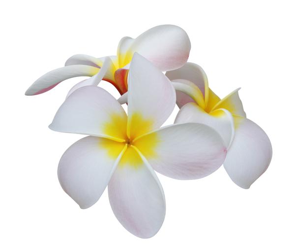 ハワイアンジュエリーのモチーフに込められた意味とは?